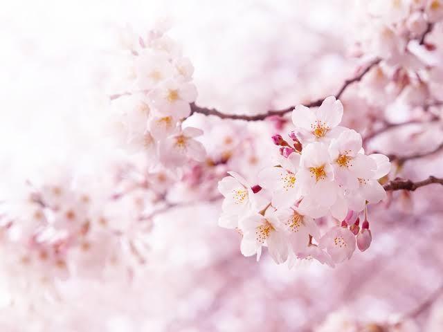 春写メ日記2021320